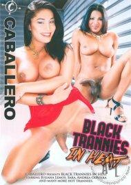 Black Trannies In Heat Porn Video